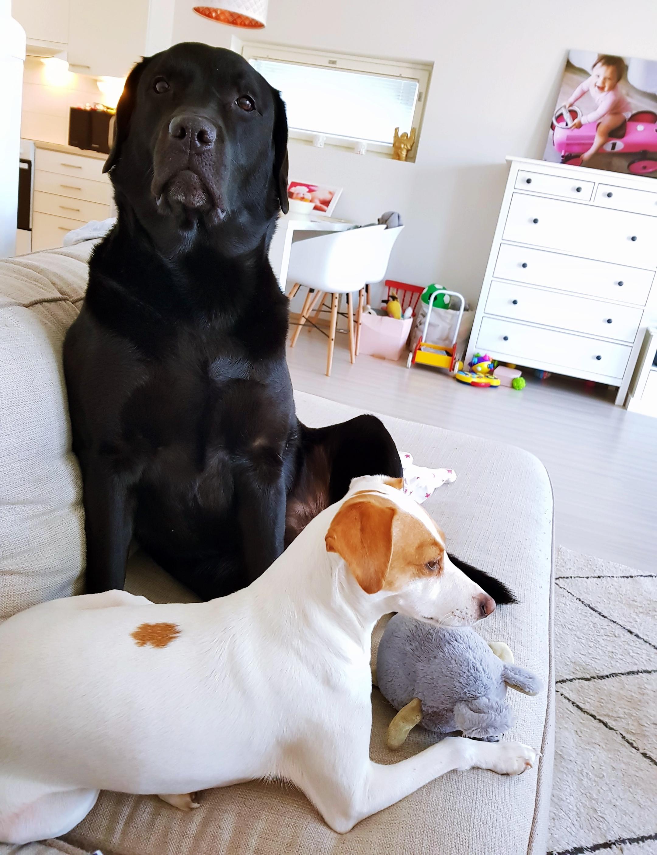 Koirien kanssa puuhailu!