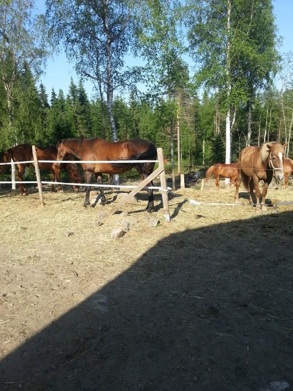 Olispa ihanaa päästä pitkästä aikaa hevosen selkään!