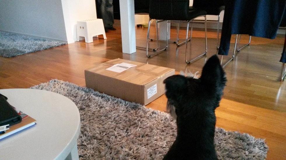 Rico ja mysteeripaketti