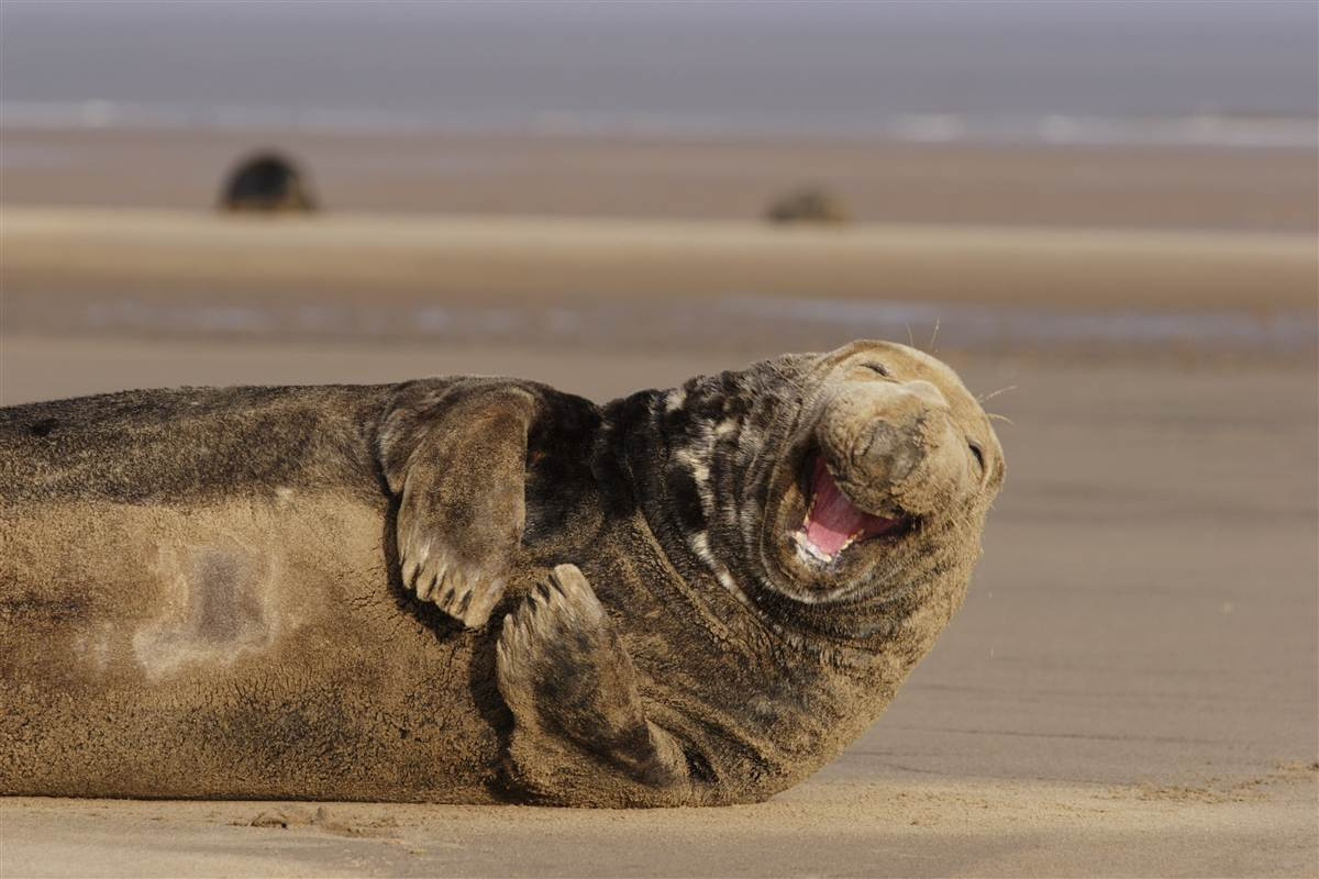 ss-111018-laughing-animals-seal.ss_full
