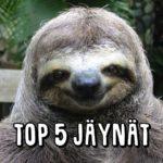 Top 5 harmittomat jäynät