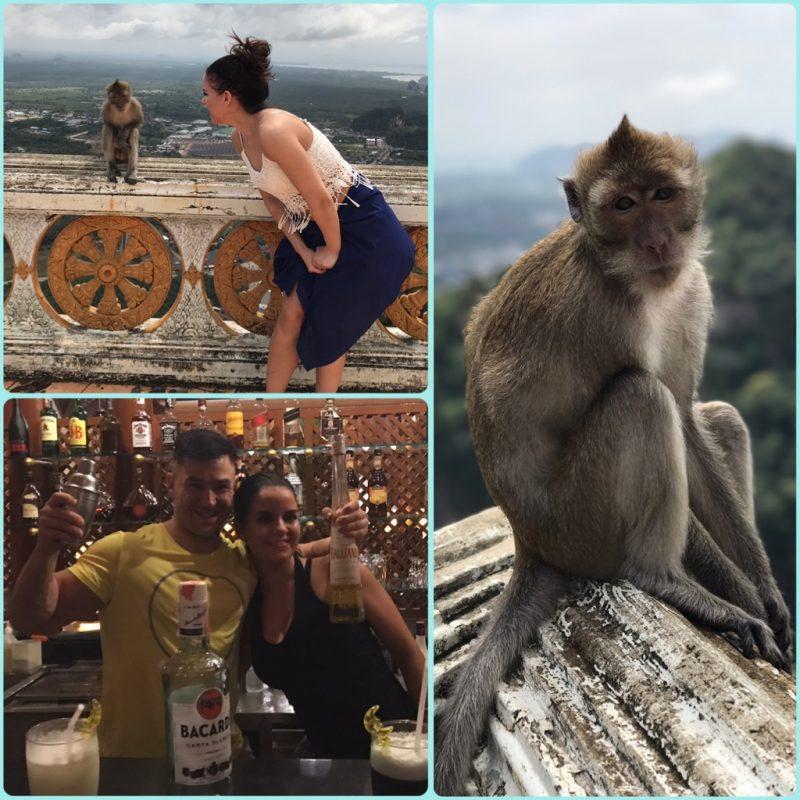 Makaki apinat näyttävät suloisilta, mutta herkut lähtevät matkaan samantien, jos ei ole tarkkana