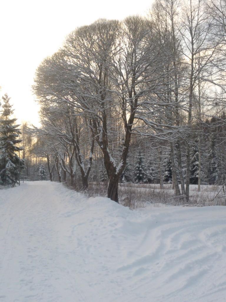 Talviset terveiset