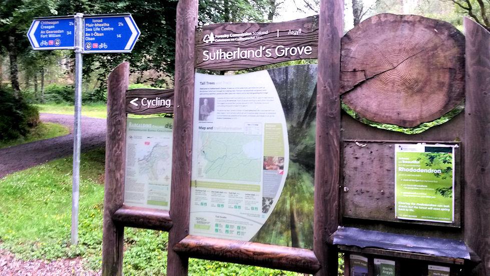 Metsässä kulki merkattuja kävelyreittejä.