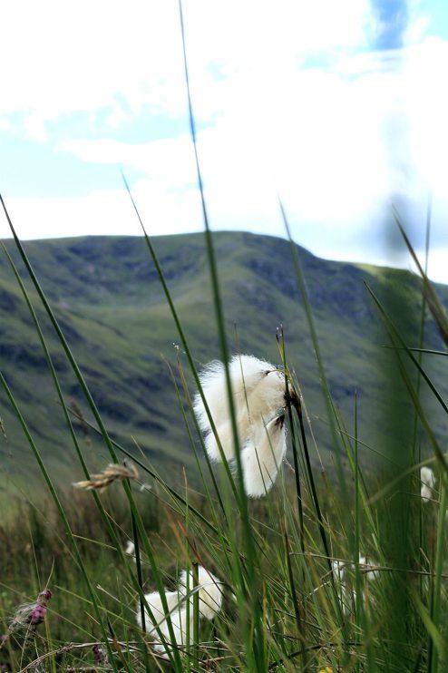 Lumoava Skotlanti osa 9: Cairngorms, Monymusk ja South Queensferry