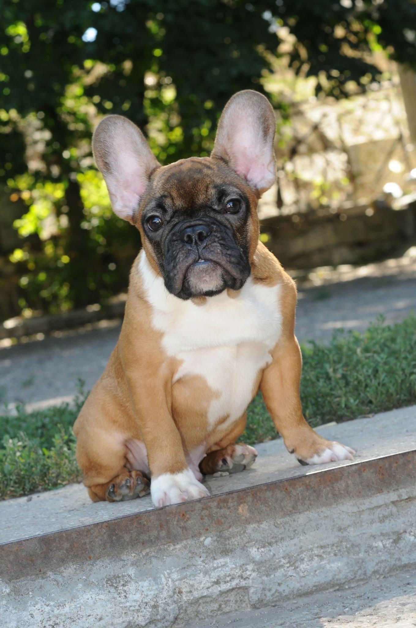 Miksi piti luopua uudesta koiranpennusta?