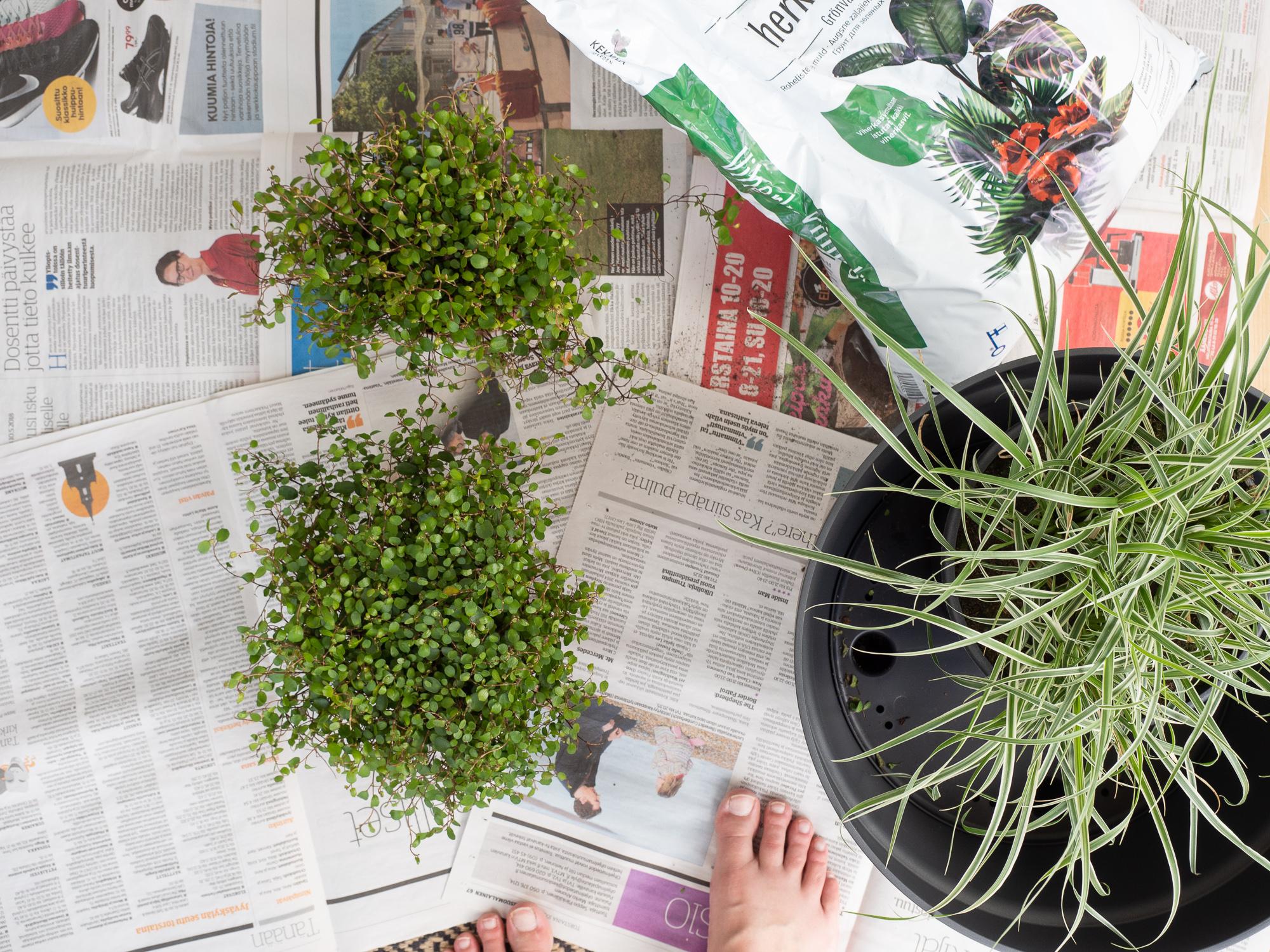 Heinäkasvit ruukussa