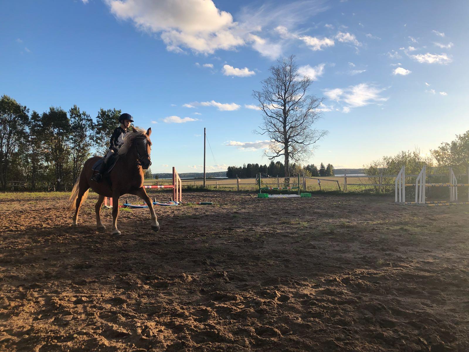 Rakkaudesta omaan hevoseen