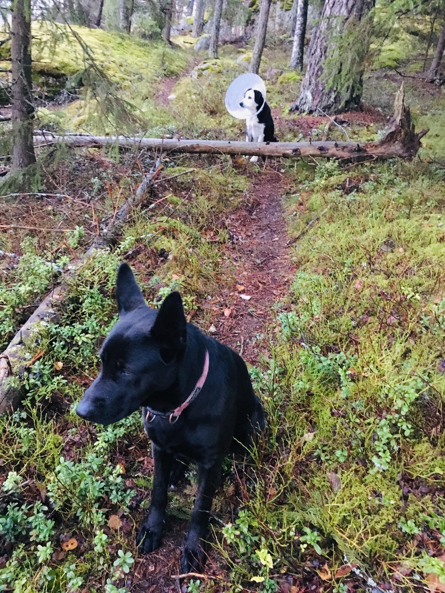 Koirista ja niiden hyvinvoinnista