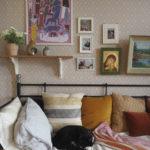 Kissoja sohvilla ja seinillä