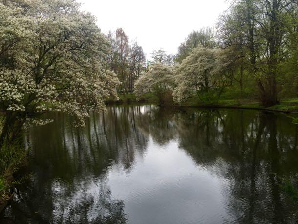 Kevät ja kukkivat puut Tiergartenin puistossa. Kuulisittepa lintujen lauln! Huimaa! Ja keskellä kaupunkia!