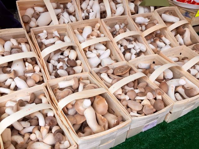 että voi sienet olla söpöjä!