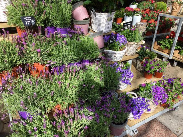 Kadulle levittäytyneestä kukkakaupasta nousi ihana laventelin tuoksu ympäristöön