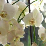 Huonekasvien keväthuolto - voitko kukkia pliis!
