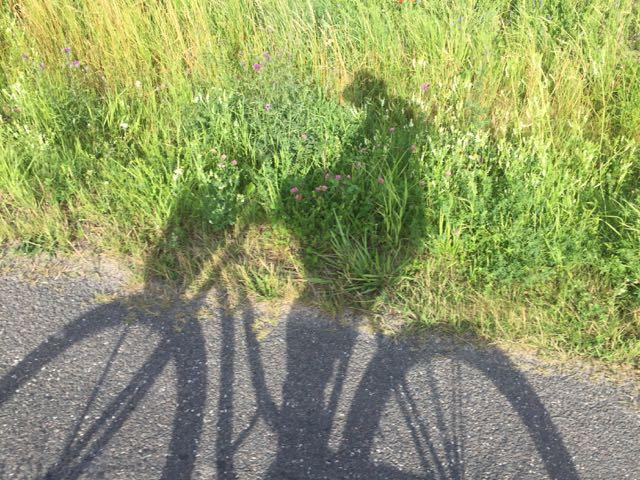 En mä aivan paikoillani ollut. Pyöräretkiä ja sen sellaista aktiivista eloa, mutta ei se ole treeniin verrattavaa.