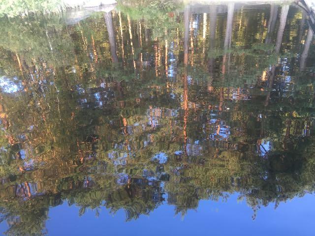 männyt heijastuvat järven pinnasta.