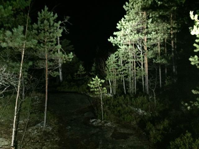 Öinen metsä on kuin satumaa
