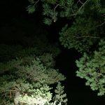 Salaisen metsän yö ja kiitokset