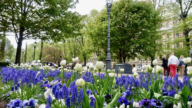 Esplanin keväisiä Suomi 100 istutuksia