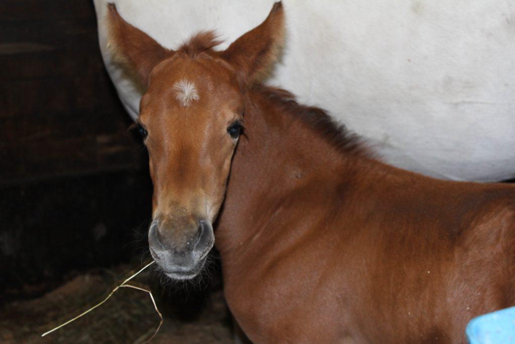 Hevoset on ihania, mutta niistä tykkäävät ihmiset ei aina ole.