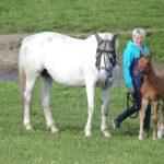 Milloin on aika hankkia oma hevonen?