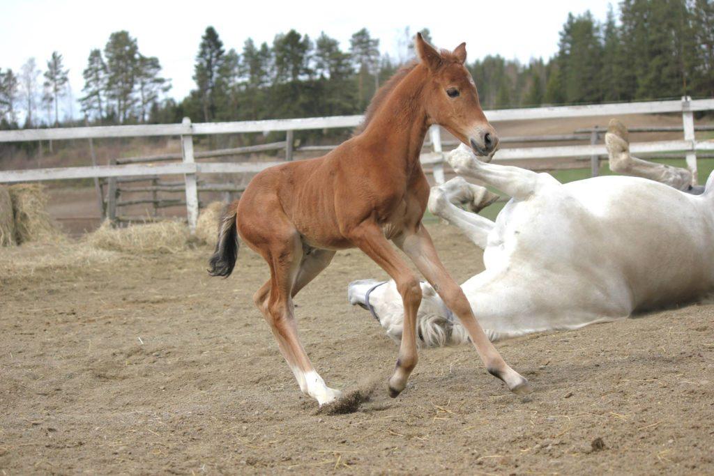 Paetkaa! Äidit kaatuilevat ympäriinsä!