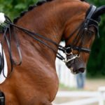 Eläinrääkkääjä Christine Wels kuoli hevosen potkuun