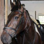 Hevosella patti poskessa ja hyvä tunti