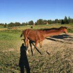 Katjan hevoskuvauskoulu, osa 1