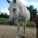 Huoleton on hevoseton jne.... no se en ole minä