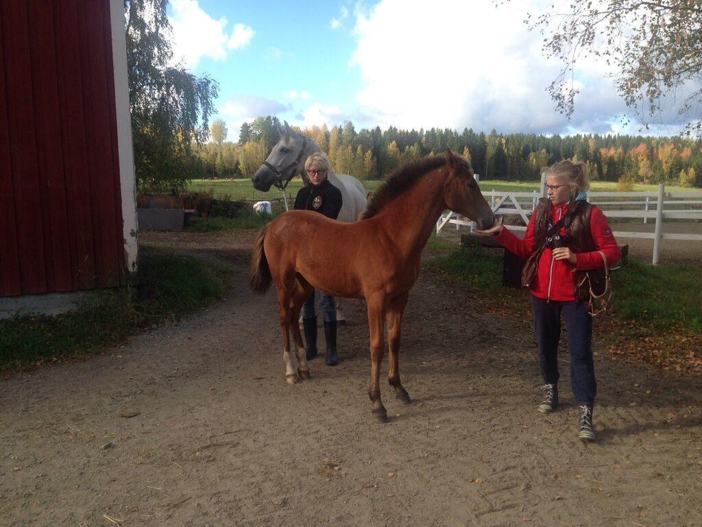 Lapseni ottaa kontaktia omaan hevoseensa, varmistaa yhteyden.