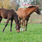 Maitorahkaa, nollarata ja eläinrääkkäysepäily