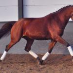 Millainen hevonen olisi hyvä juuri minulle?
