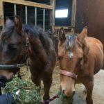 Ristiäiset hevosmaailman tapaan