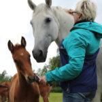 Mihin hevosia tarvitaan?