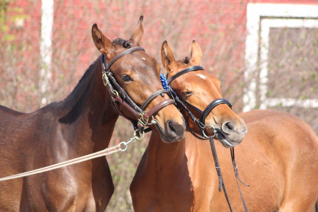 Kuvan hevoslapset eivät kuulu tilanteeseen millään tavalla.