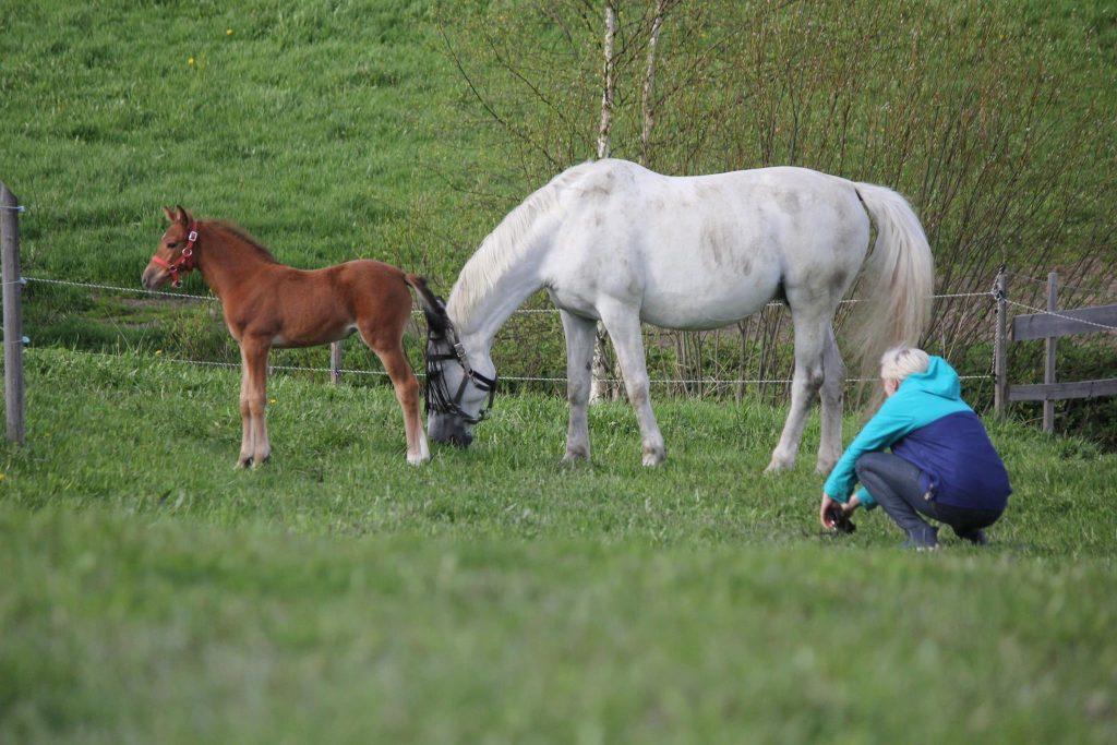 Katsokaas kun rikas kyykkii hevostensa äärellä.