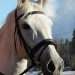 Erimuotoiset hevoset ovat ratsastuksen suola