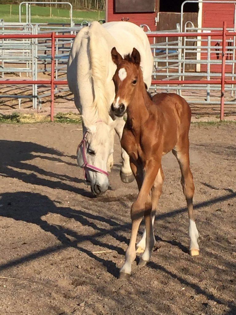 Täysin normaali hevosen lapsi, mikä tässä nyt on niiin...Kuva: Outi Impivaara