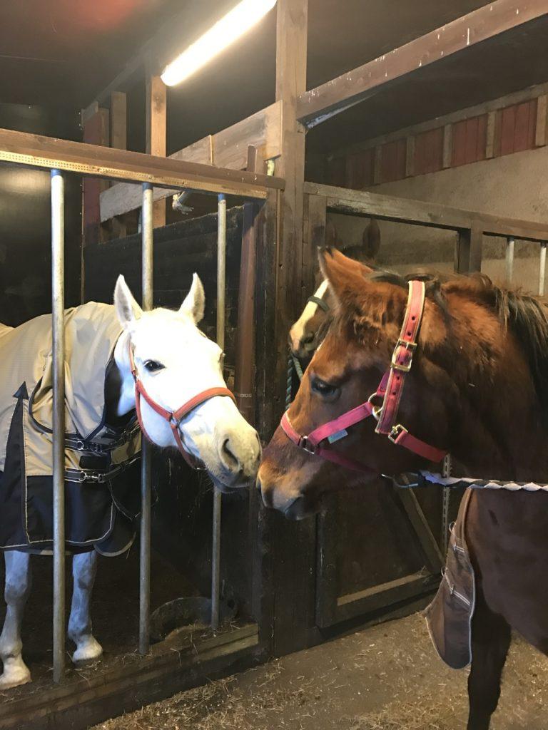 Äiti ja lapsi. Vasemmalla äiti. Siis hevosen, ei minun.
