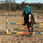 Hevosella hyppääminen rules ok!