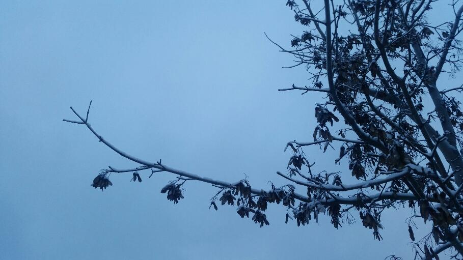 Puu suomi sata