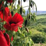Kevätloma Toscanassa - ja vieläpä häissä