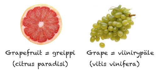 Grapefruit_grape