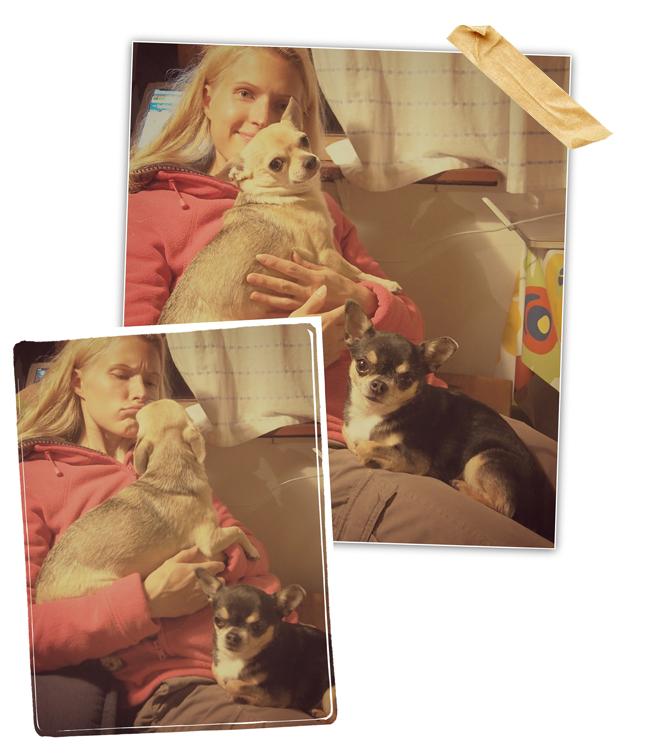 Koirienkanssa13102013