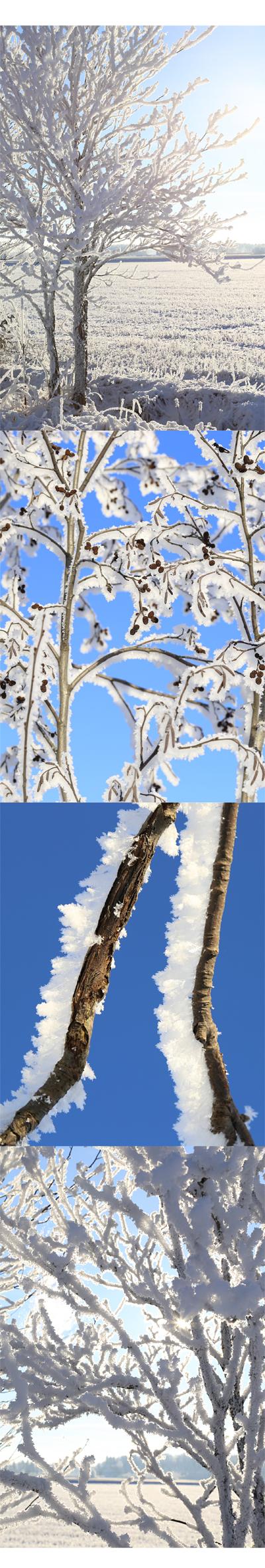 Talvikuvia2_tammikuu14