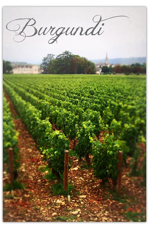 Vuorilta viinitarhoille