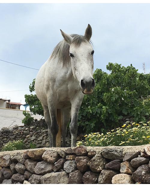Patmos_IMG_8384