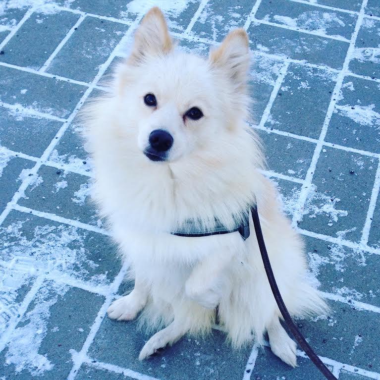 koira-talvi