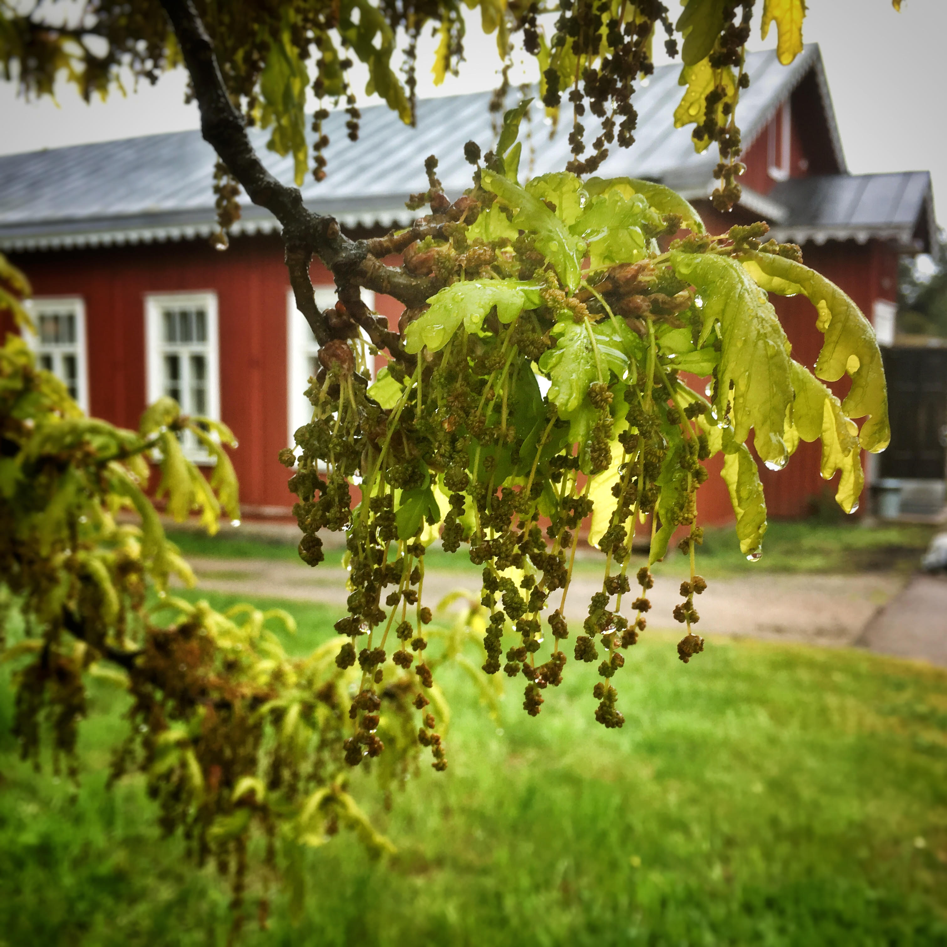 suomen-kesä